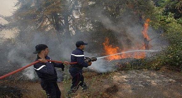 """اشتوكة: النيران تلتهم 5 هكتارات من الغطاء النباتي بـ""""أوكنز"""""""