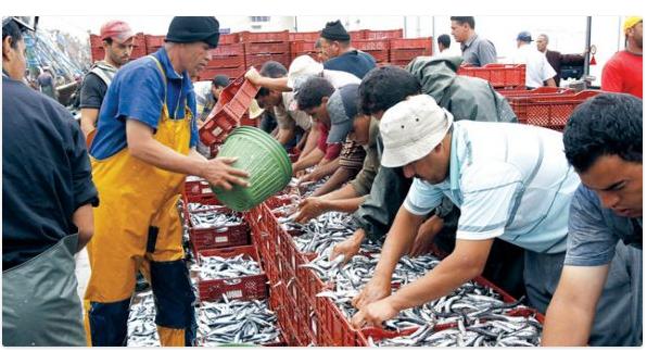 لأول مرة منذ سنوات.. الأسماك بأسواق الحسيمة تهبط بنسبة 70%