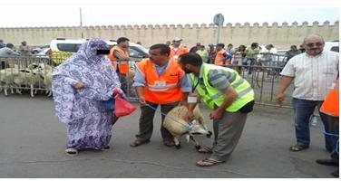 مهنيو قطاع سيارات الأجرة بأكادير الكبير يوزعون 56 أضحية عيد على الفئات المعوزة