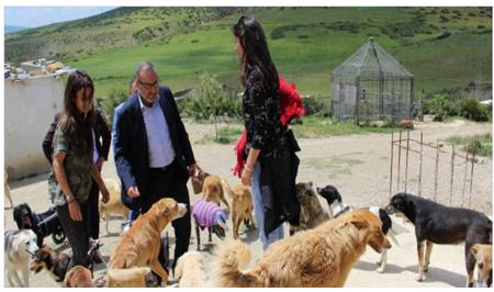 بسبب الكلاب الضالة.. جماعة طنجة تدرس إحداث مركز للتلقيح