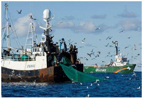 """قانون جديد يُشدد الخناق على """"مافيات الصيد البحري"""" في المغرب"""