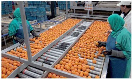 إرتفاع قيمة صادرات المنتجات الغذائية الفلاحية المغربية